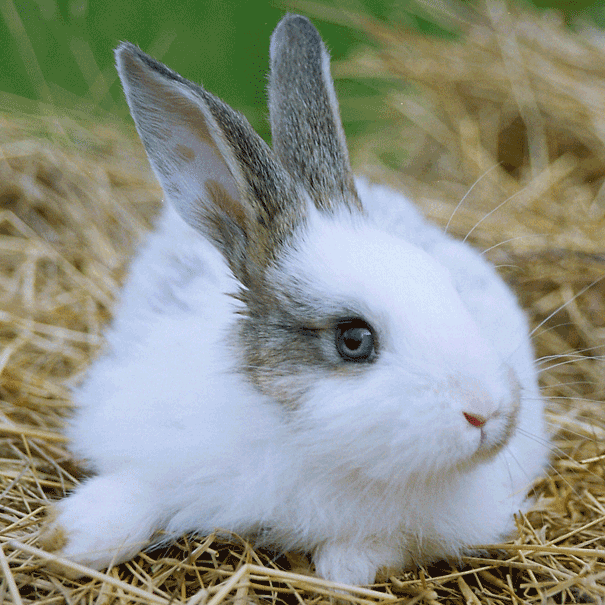 small animal products rabbit