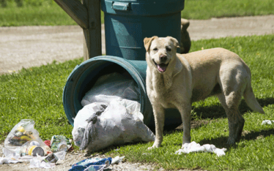 UNDERSTANDING YOUR DOG'S NATURAL INSTINCT TO HUNT AND FORAGE FOR FOOD