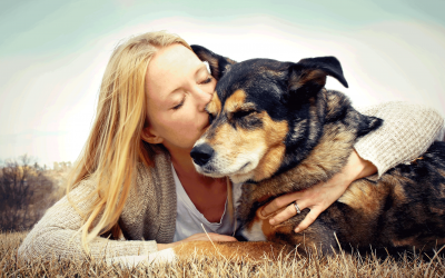 WHY ADOPT A SENIOR DOG?