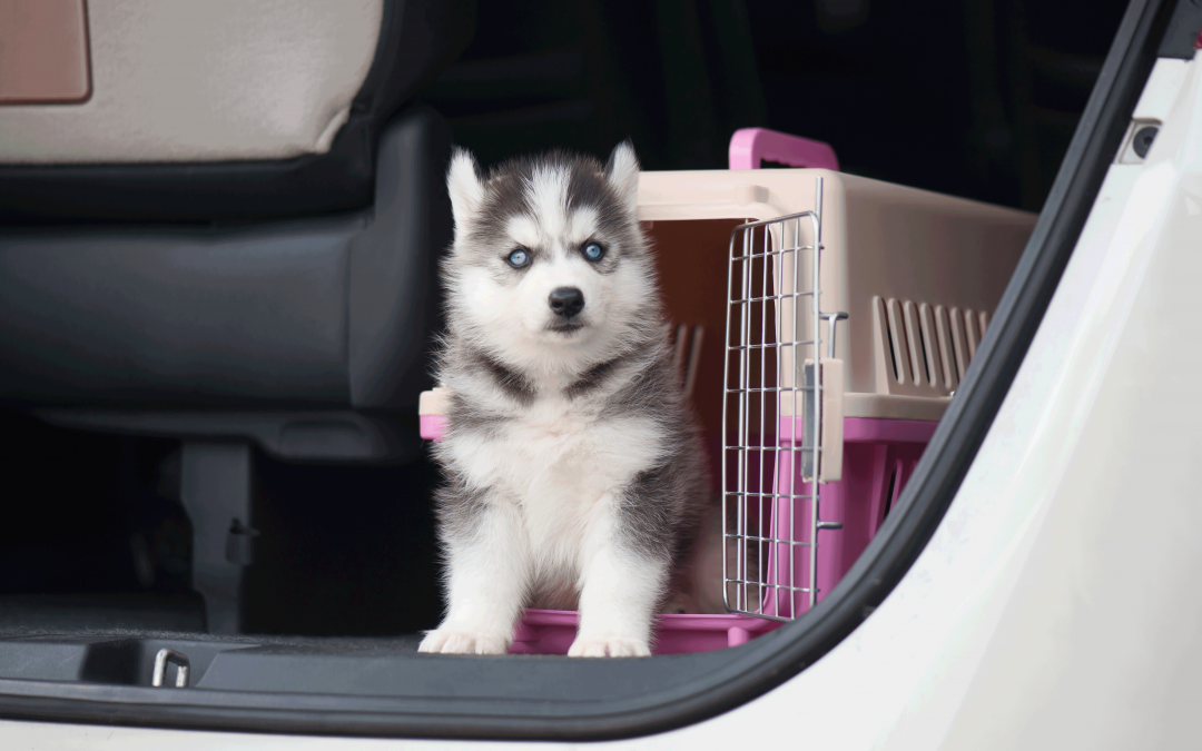 KEEP YOUR FURRY FRIEND SAFE WHILE TRAVELING