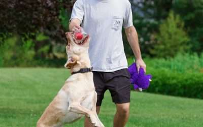 WHAT IS IT ABOUT HERO BALLS THAT DOGS LOVE?