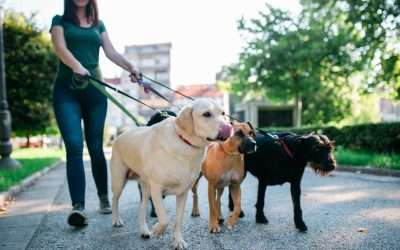 YOU LOVE WALKING DOGS, BUT DO YOU NEED TO BE CERTIFIED TO BE A PROFESSIONAL PET SITTER?