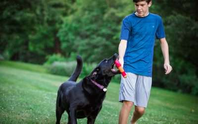 HERO ULTRA PLAY BRINGS DOG PLAY TO A NEW ULTRA-LEVEL