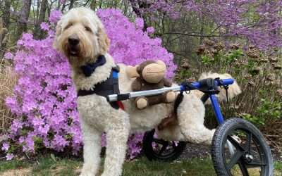 Hero Supermodel, Oliver, A Specially-abled Pet!